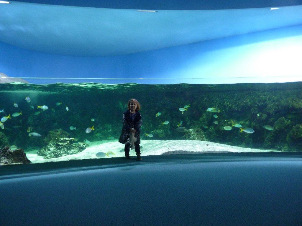 Nous 4 visite l aquarium de la rochelle for O miroir la rochelle